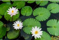 vodné rastliny