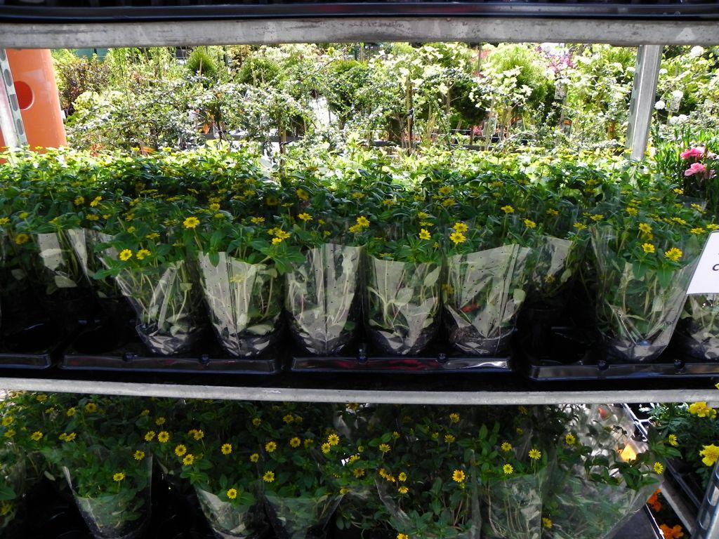 záhradníctvo fajčáková,kvety a dreviny,humenné